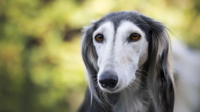 Gesundheit Hunde Gutes Fell Tierpuls 3047291