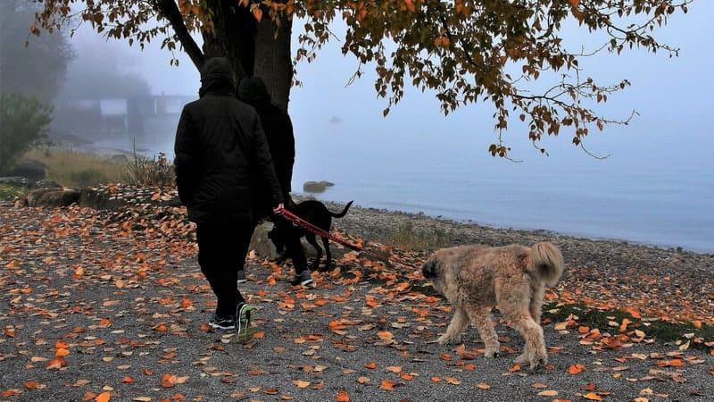 Gassi gehen im Regen? Wenn der Hund NEIN sagt?!