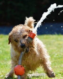 Hund Gassi Wasser Wasserschlauch Spielen Regen 1310545