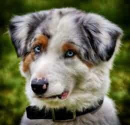 Hund Portrait Huetehund Tierpuls 3698557