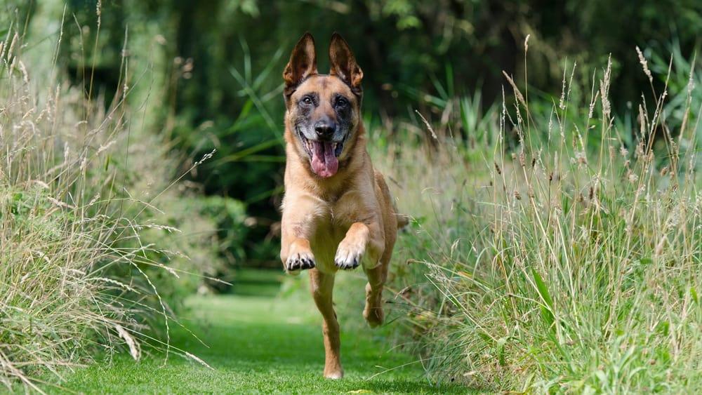 Abrufen beim Hund: Die wichtigste Lektion
