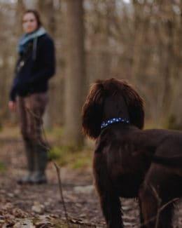 Hund Wird Abgerufen Wald Tierpuls 2590520