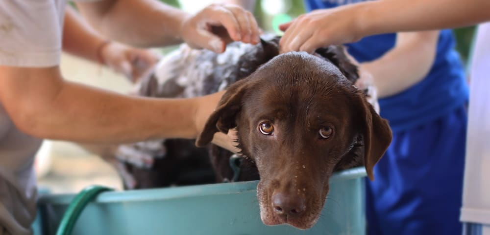Hund Wird Gebadet Tierpuls Badetag 4125187