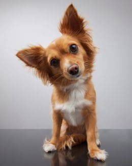 Hunde Alleine Portrait Tierpuls 1723894