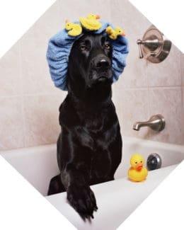 Labrador Badewanne Dusche Quitscheentchen Tierpuls 1205960