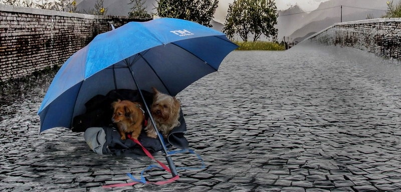 Regen Tierpuls Regenschirm Hundregeneschirm Yorki 1186406