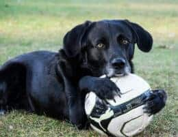 Spielen Hunde Ball Sport 3010442 Tierpuls