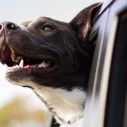Hilfe: Mein Hund jagt Autos hinterher