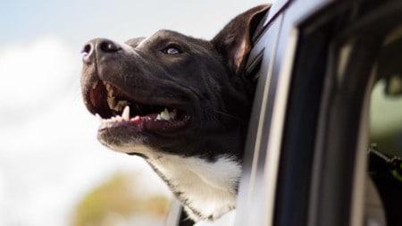 Tierpuls Hund Auto Luft