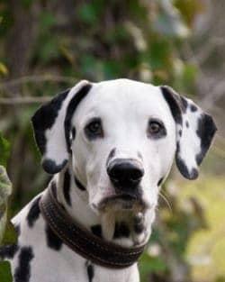 Tierpuls Hund Hundepups 3210090