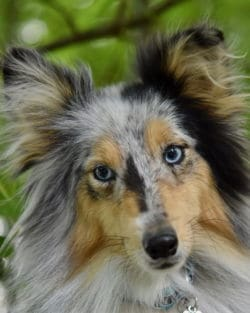 Tierpuls Hunde Autos Jagen 4214104