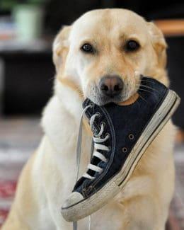Tierpuls Hunde Labrador Schuh Spielzeug 633562