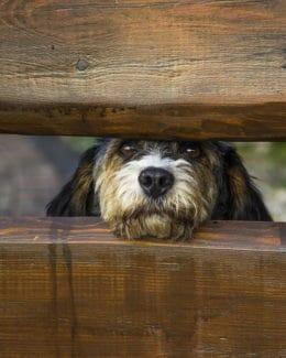 Zaun Hund Wartet Auf Herrchen Tierpuls 340327