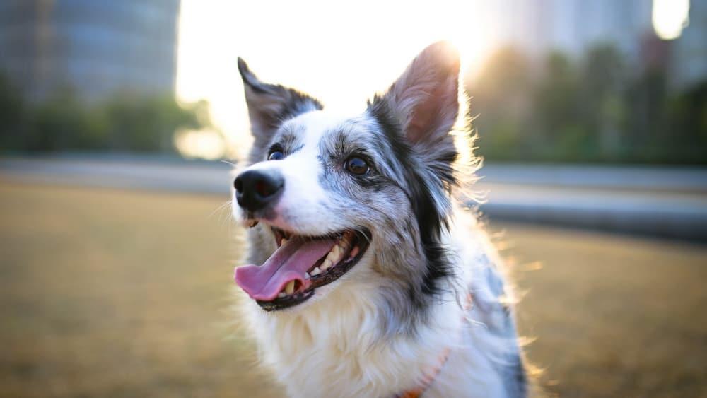 Hausmittel gegen Mundgeruch bei Hunden