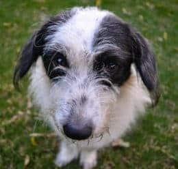 Aengstliche Augen Beim Hund Tierpuls