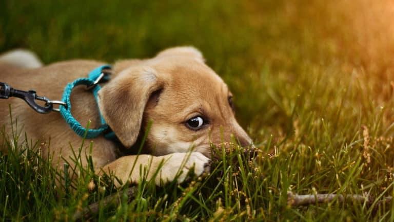 Der ängstliche Hund – verlorenes Selbstvertrauen