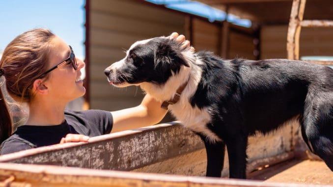Hund Freundschaft Zutrauen Keine Angst Tierpuls