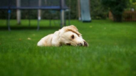 Hund Gras Fressen Wiese Tierpuls