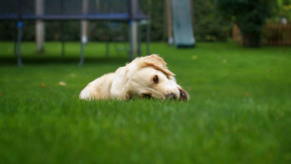 Mein Hund frisst Gras