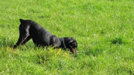 Hund Buddeln Graben Garten 731995