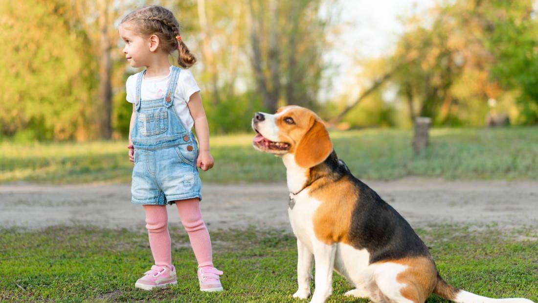 Beagle Hunderasse Kinderlieb Verspielt Tierpuls