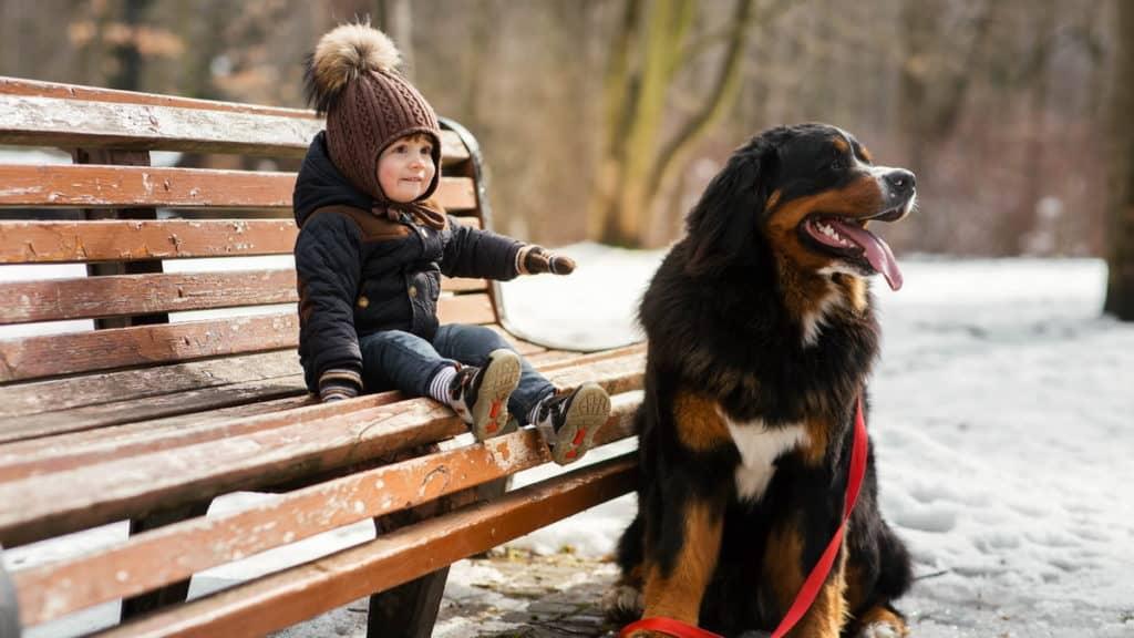 Berner Sennenhund Hundrasse Mit Kind Parkbank Schnee Tierpuls
