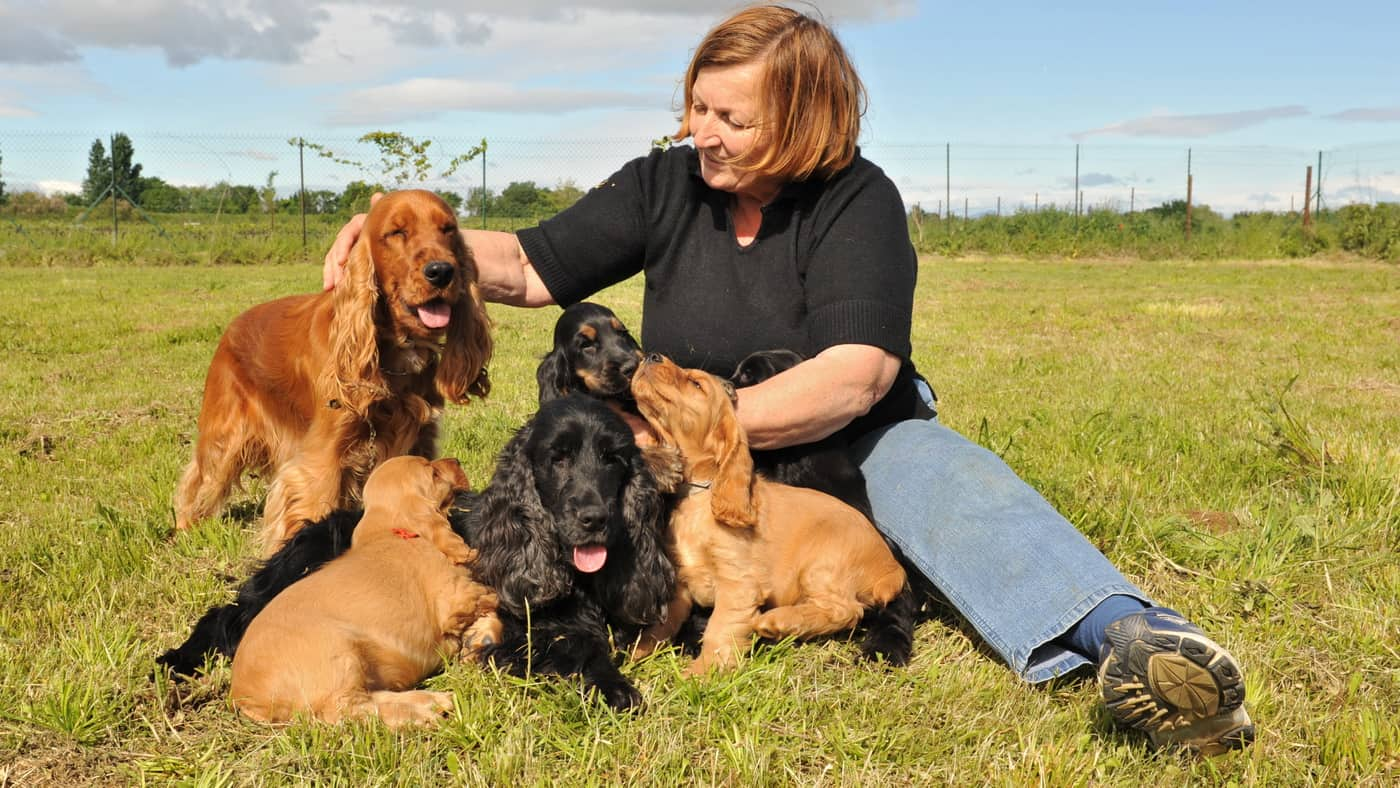 Read more about the article Cocker Spaniel