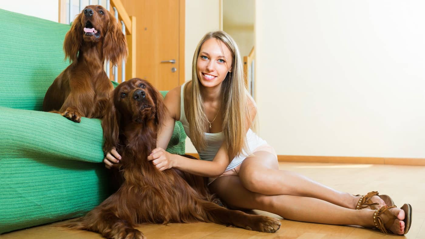 Read more about the article Irish Setter